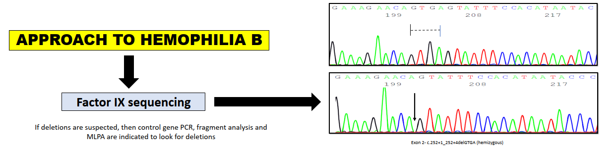 Approach to Hemophilia B